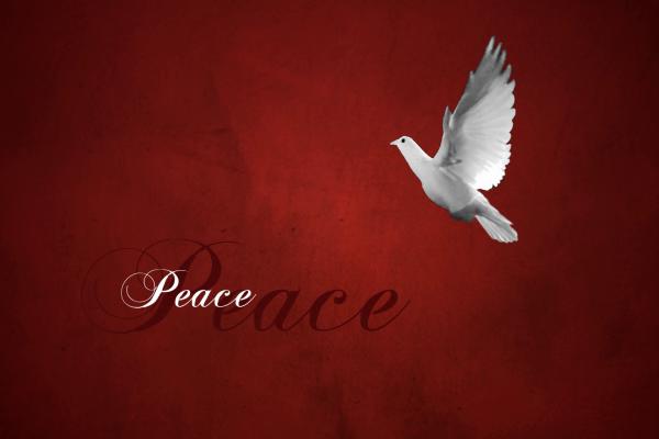 White Dove Holiday Ecard