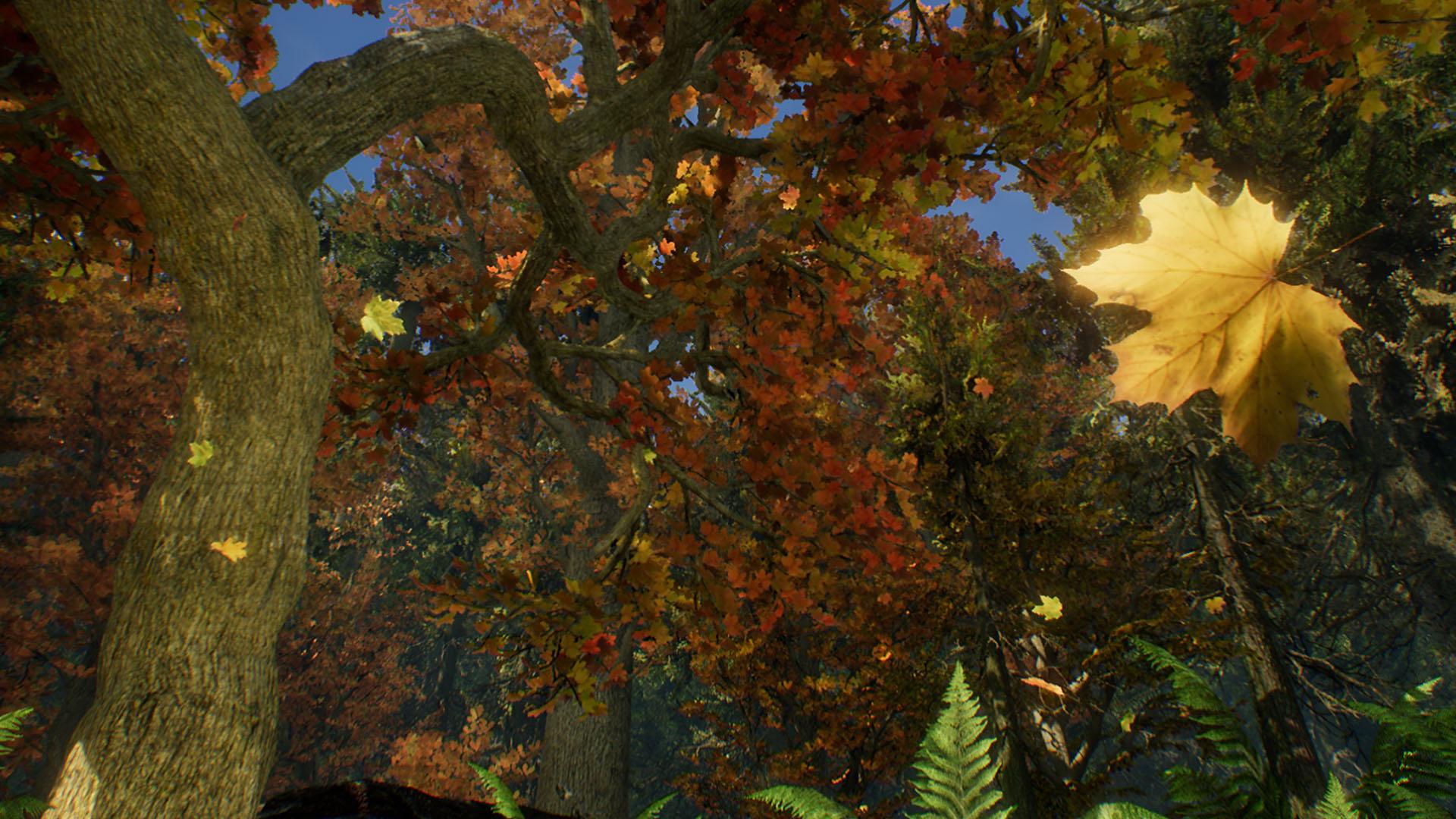 Fall Forest Ecard